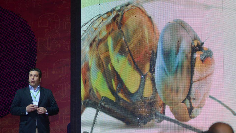 libélula y bigdata